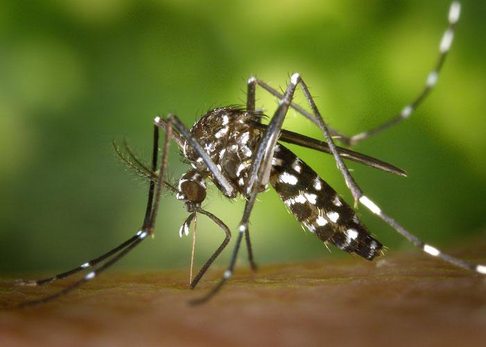 insekten-schutz-berkenkamp-tischlerei
